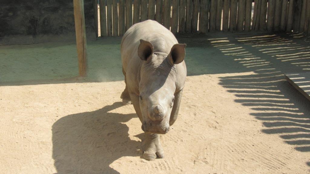 Rhino Oz hat großen Appetit