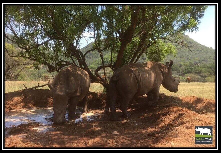 Rhino Oz - Ein Schlammbad ist immer eine gute Idee
